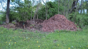 the new improved compost pile